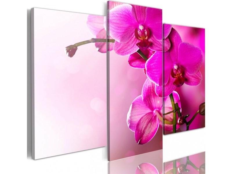 Tableau orchidée de couleur rose foncé A1-N1422PWD