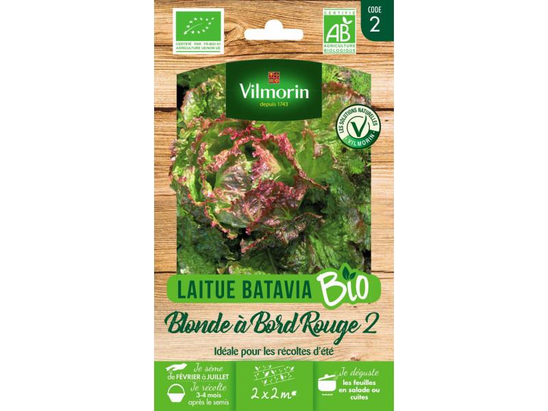 Lettuce Lactuca Sativa SEM06 0,150 grammes Laitue de Printemps St-Antoine Bio