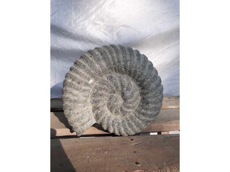 Sculpture coquille de nautilus en pierre volcanique 20 cm 021-1000