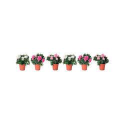 6 sticker pour vitre plante - pivoine