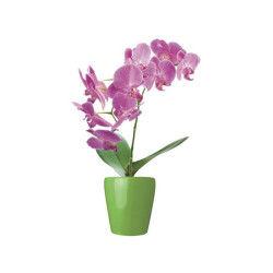 2 stickers vitre zen - 33 x 45 cm - orchidée en pot