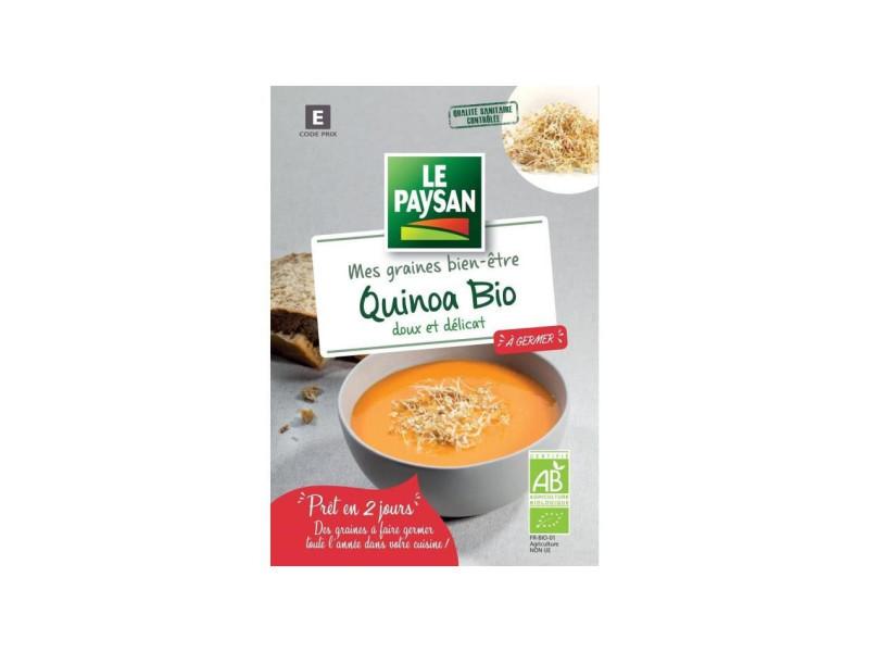 Le paysan quinoa a germer PFWY16469