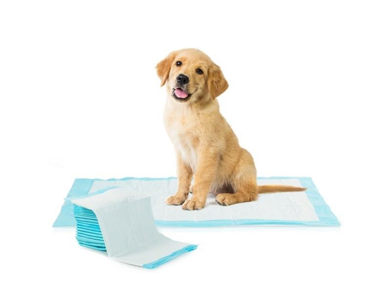 Lot de 100 tapis éducateurs pour chiens