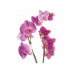 2 stickers vitre zen - 33 x 45 cm - orchidée rose